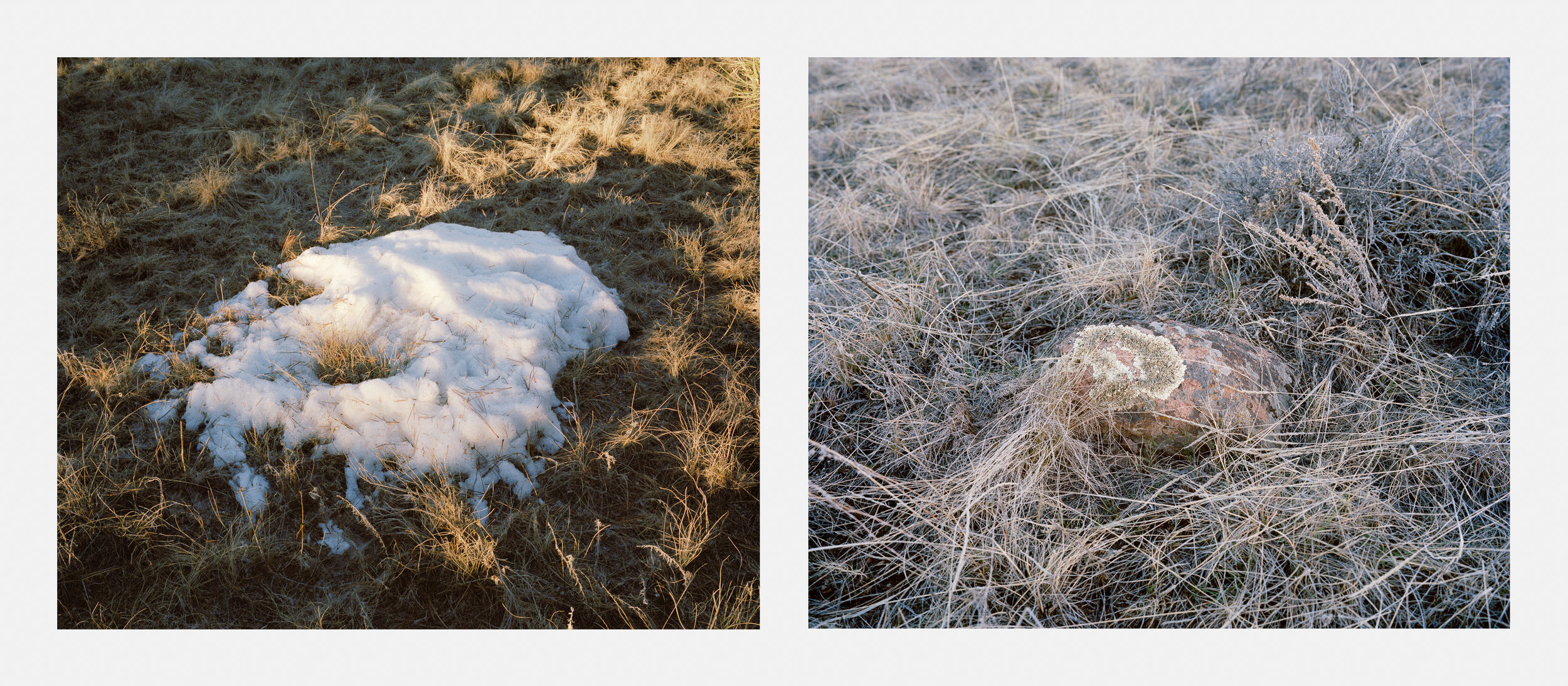Snow/Moss