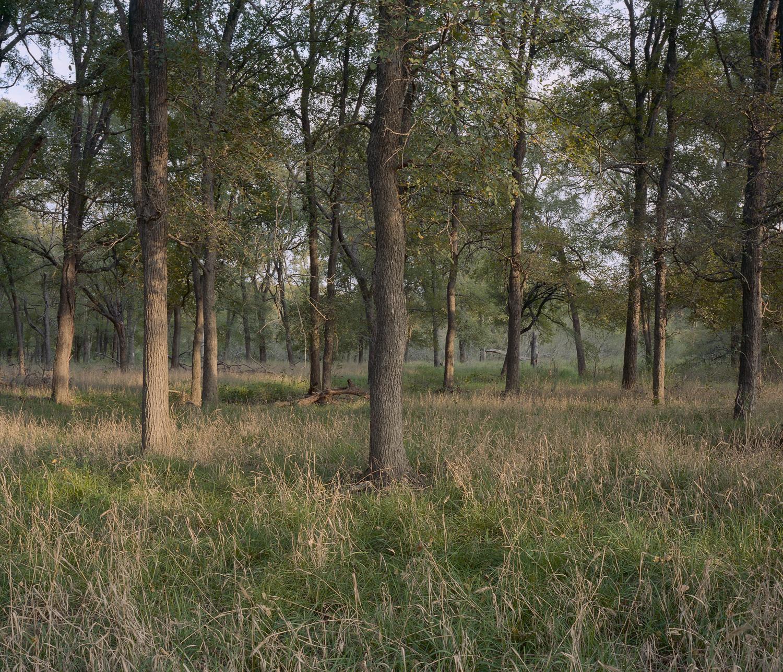My Grandfather's Land