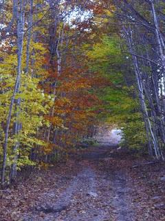 patricia_shea_path_thru_trees.jpg