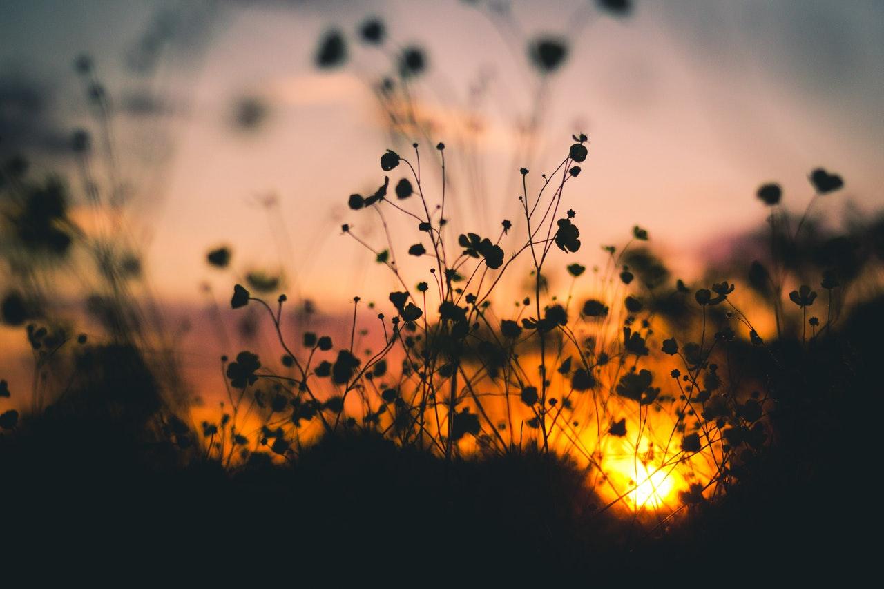 evening-flowers-nature-7314.jpg
