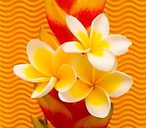 Yellow_White flowers.png