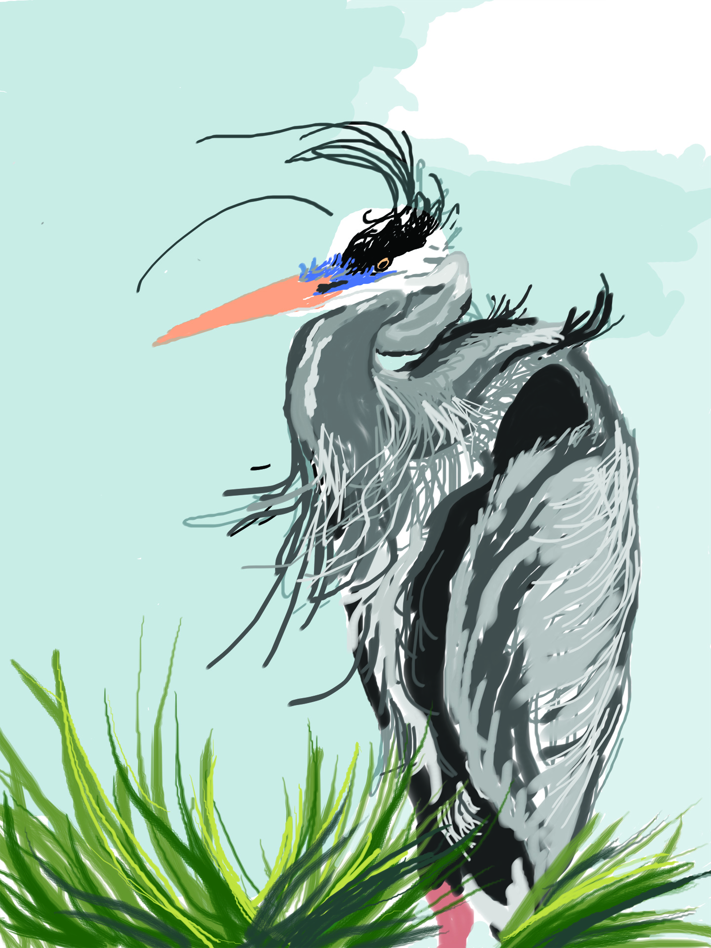 Heron Sketch -color