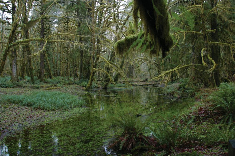 Quinault-Rainforest2-LoRes.jpg