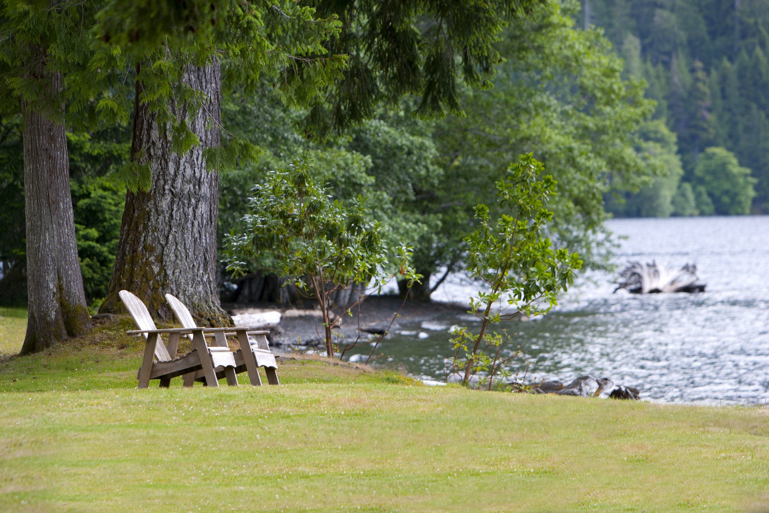 Lake Crescent - lake front (11).jpg