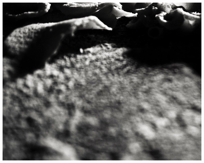 Photograph_MicroEcosystem_02.jpg