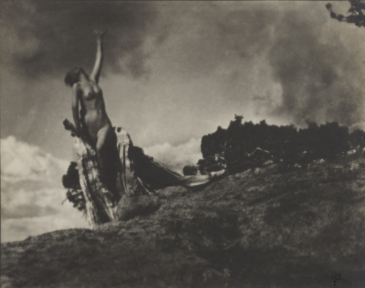 Anne Brigman, 'Soul of the Blasted Pine,' negative made 1906. (Wilson Centre for Photography)