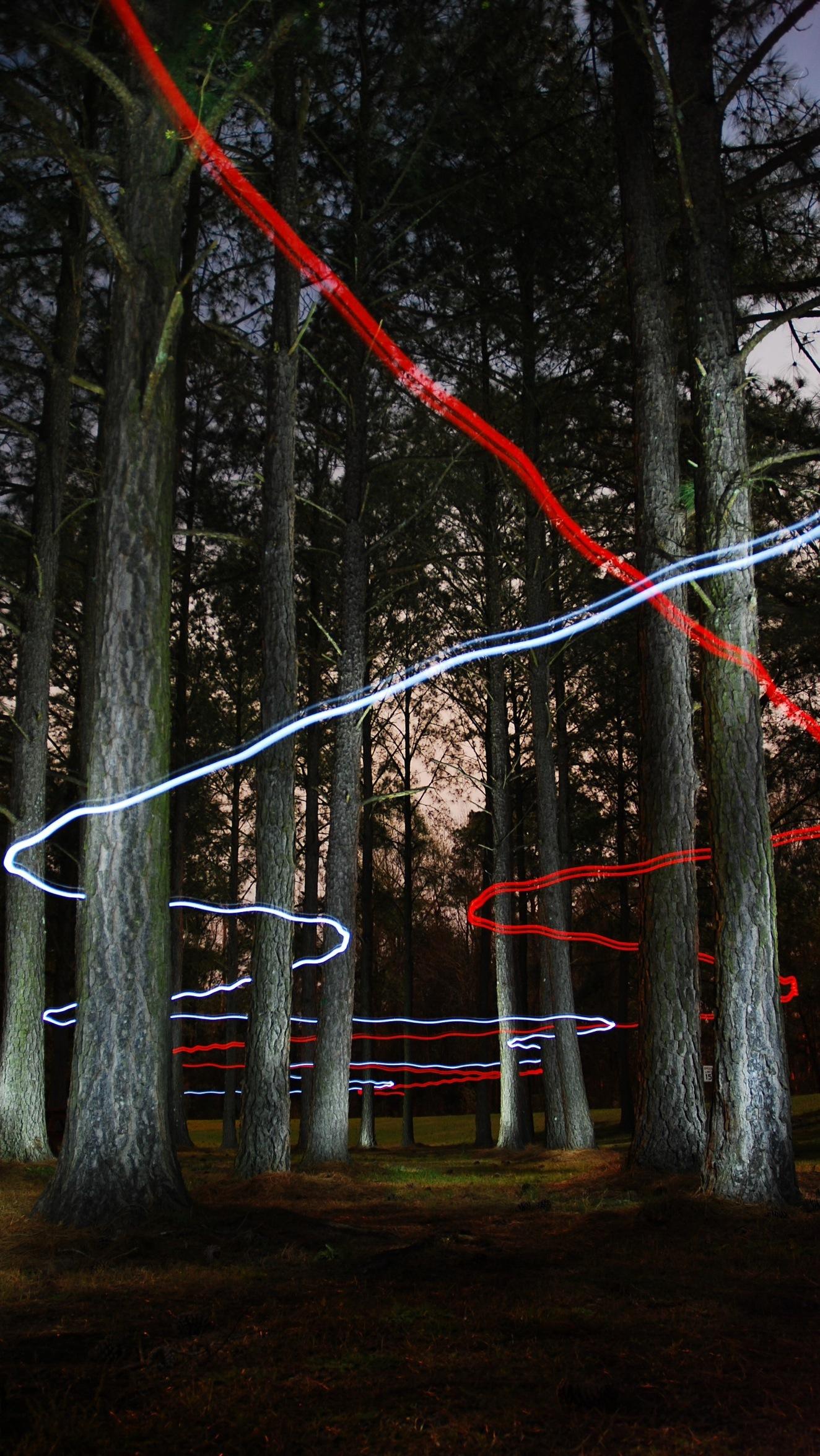 Forest Lights. Free Wallpaper