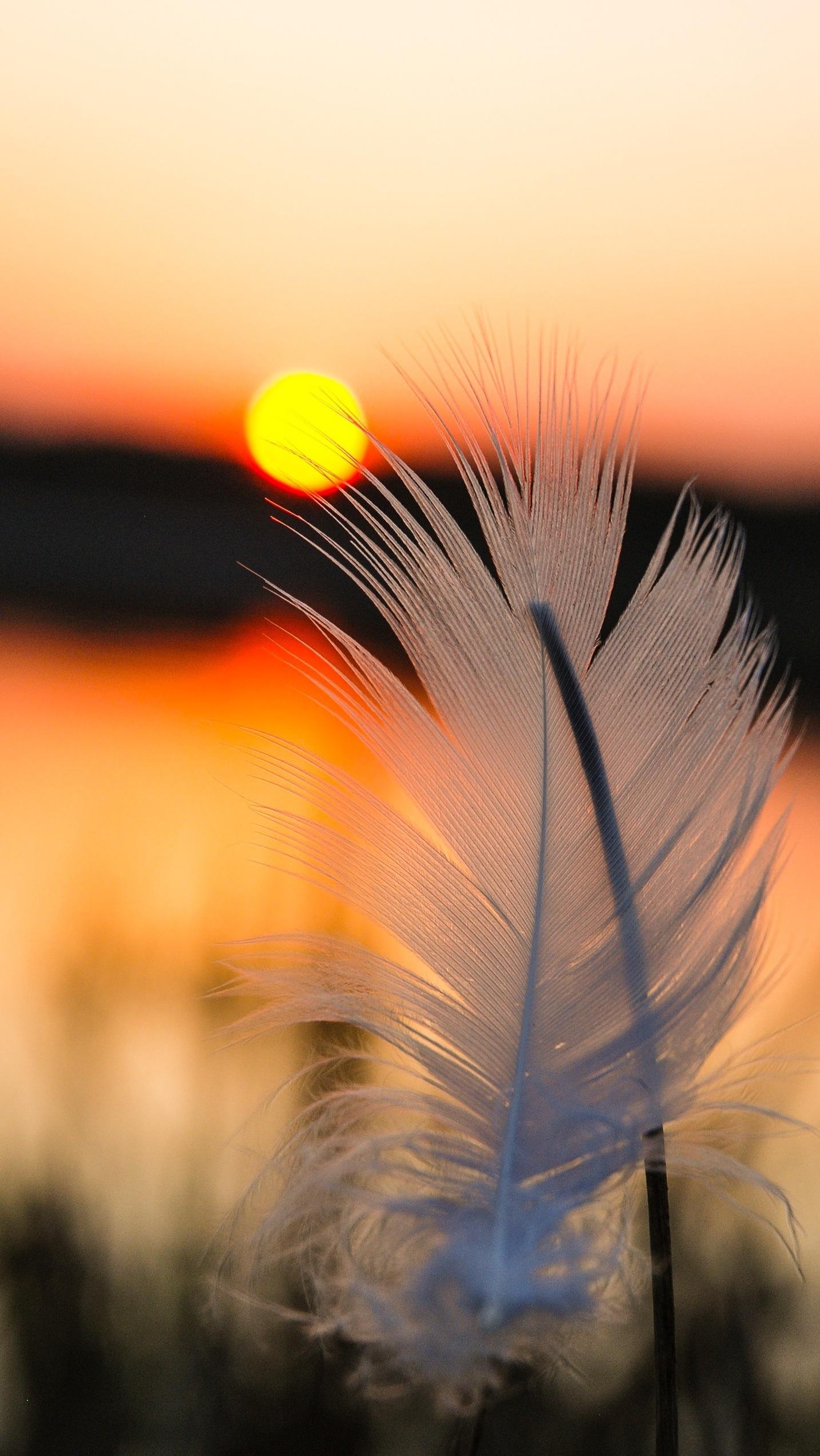 Golden Feather. Free Wallpaper