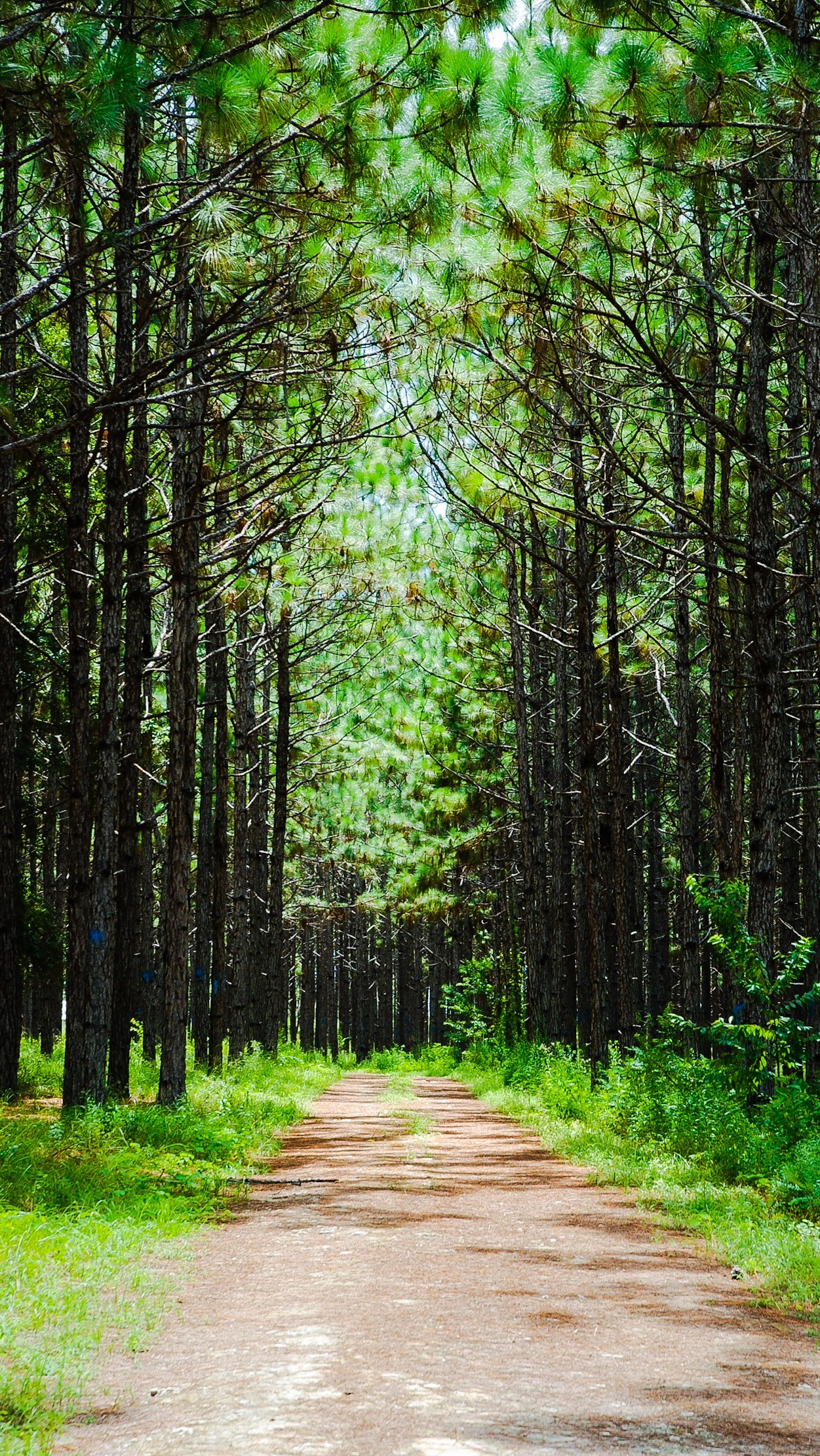 Forest Road. Free Wallpaper