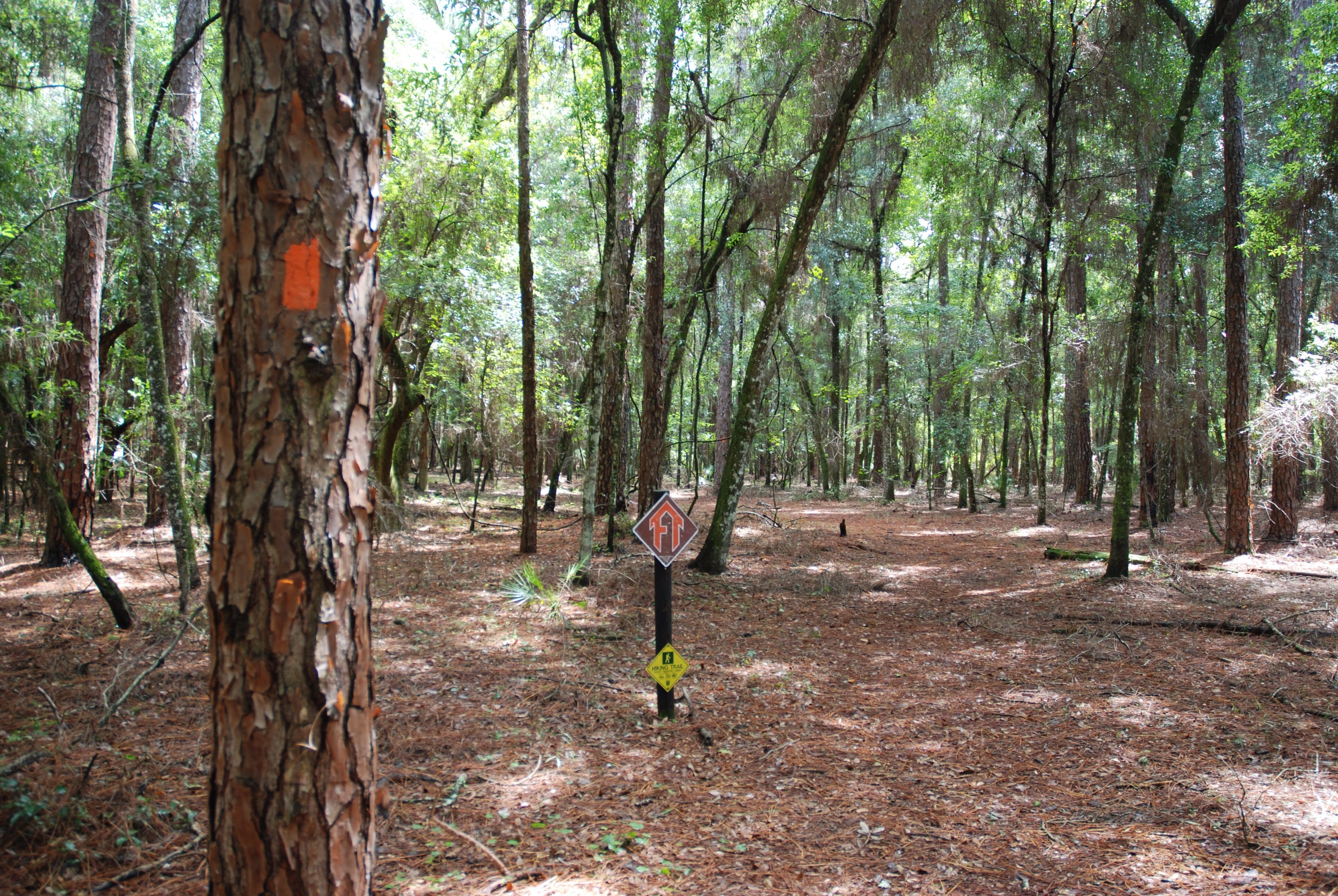 The FT, Florida Trail.
