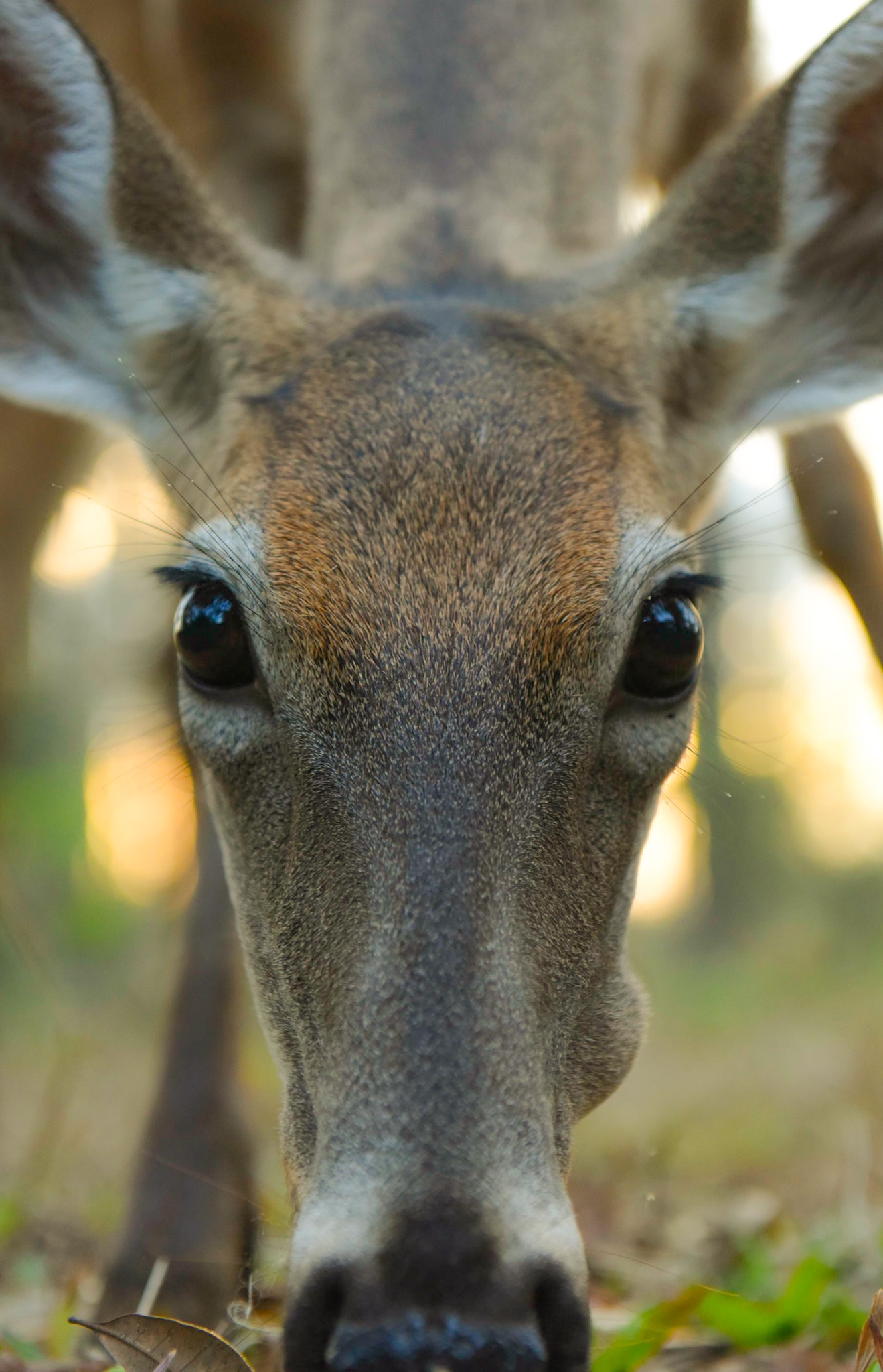 Oh Deer, Free Wallpaper