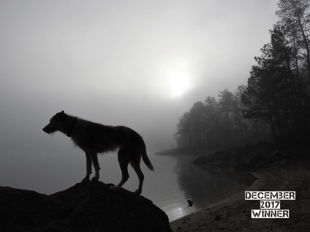"The theme of the December G.O. Photo Contest was "" Let the light shine in"". This Stunning shot from Jeff S.  @Kayakjeff7  on Instagram plays with the light and shadows so perfectly. The white soft glow of the fog and subtle reflection off of the water are like magic. The composition is outstanding, placing Sophie (the Dog) in the foreground on the bottom left point (  Rule of Thirds ) and then the beach and forest follow the right two points of interest. This is an amazing Image Jeff and the judges are defiantly blown away! Keep up the great work and I can not wait to see what you come up with next!"
