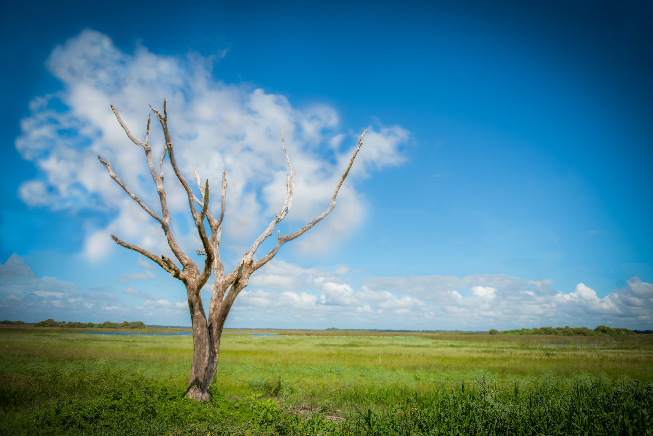 cloud tree (12 of 1).jpg