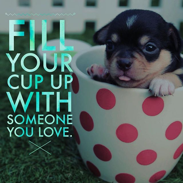 """Tag someone you love!Sometimes the most important food in your life is what @nutritionschool calls """"primary food."""" Surrounding yourself with people who love and support you (it doesn't have to be family) can really help you be #healthy during the #holidays. #puppy #coffee #tea #puppies #puppiesofinstagram #love #primaryfood #polkadots #dogs #dogstagram #family #friends #bestfriends #bff #selflove #puppylove #bodypositive #happiness #happy"""