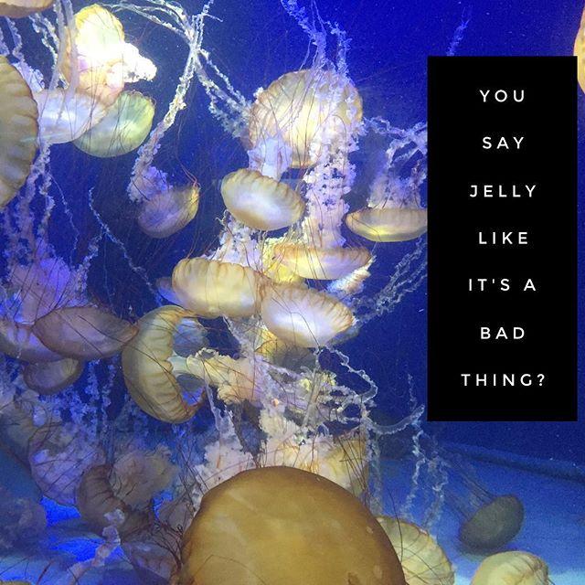 Jellyfish are beautiful. So is your jelly. #idontthinkyourereadyforthisjelly #jellyfish #longbeach #aquarium #tbt #nofilter #jellydonuts #mermaid #mermaidlife #swimming #bodylove #bodypositive