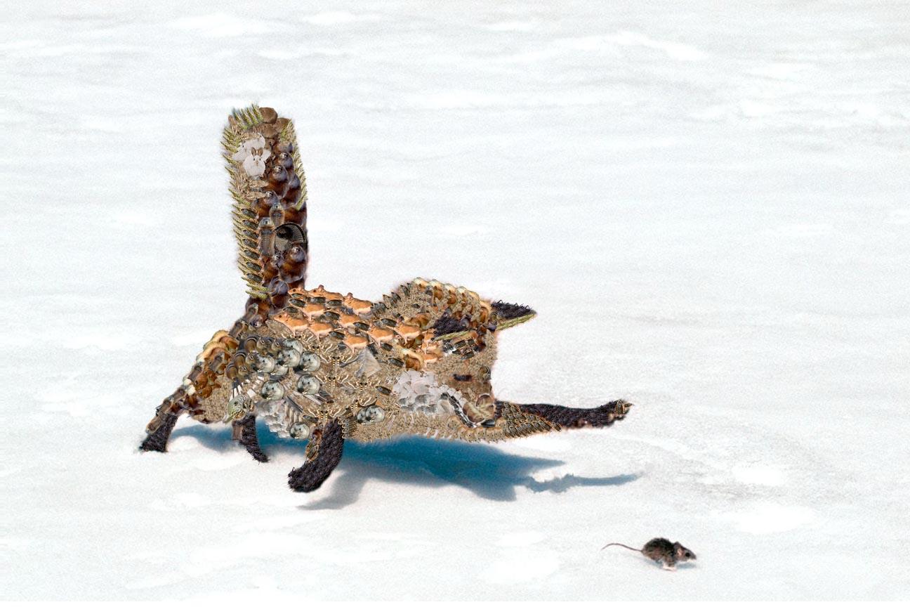 Data Fox