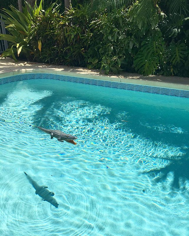 I think the shadow is scarier than the actual gator... 🐊 #gatorsighting #florida #poolday #summertime #alligator #wildlife
