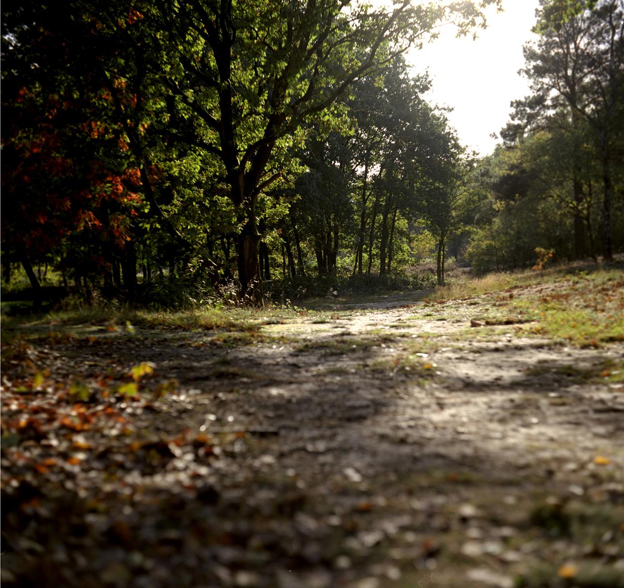 herfst01.jpg