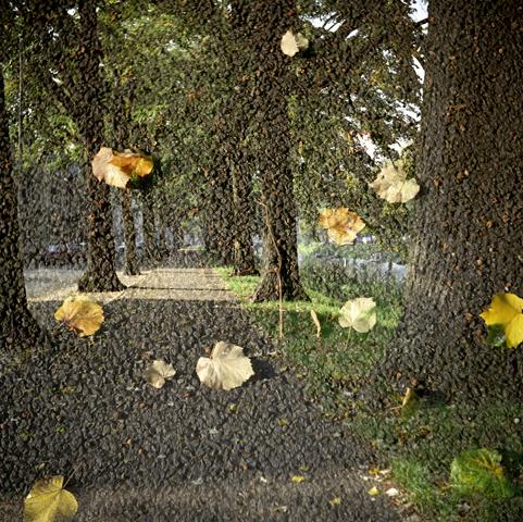 herfst2.jpg