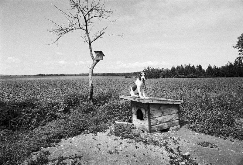 coon+dog,+Maine+copy.jpg