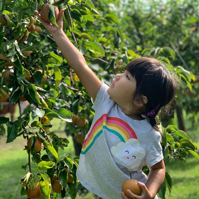 Pear picking with lots of family today 🍐🌈✨