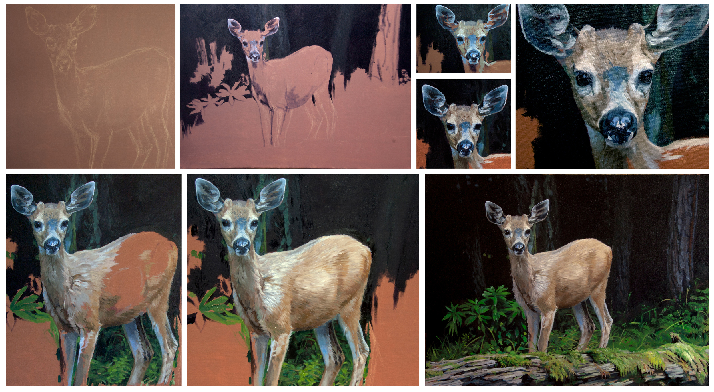 Progression of the Whitetail.