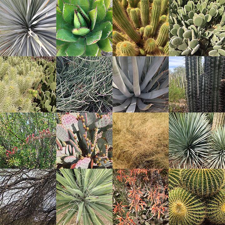 Desert-montage.10in.jpg