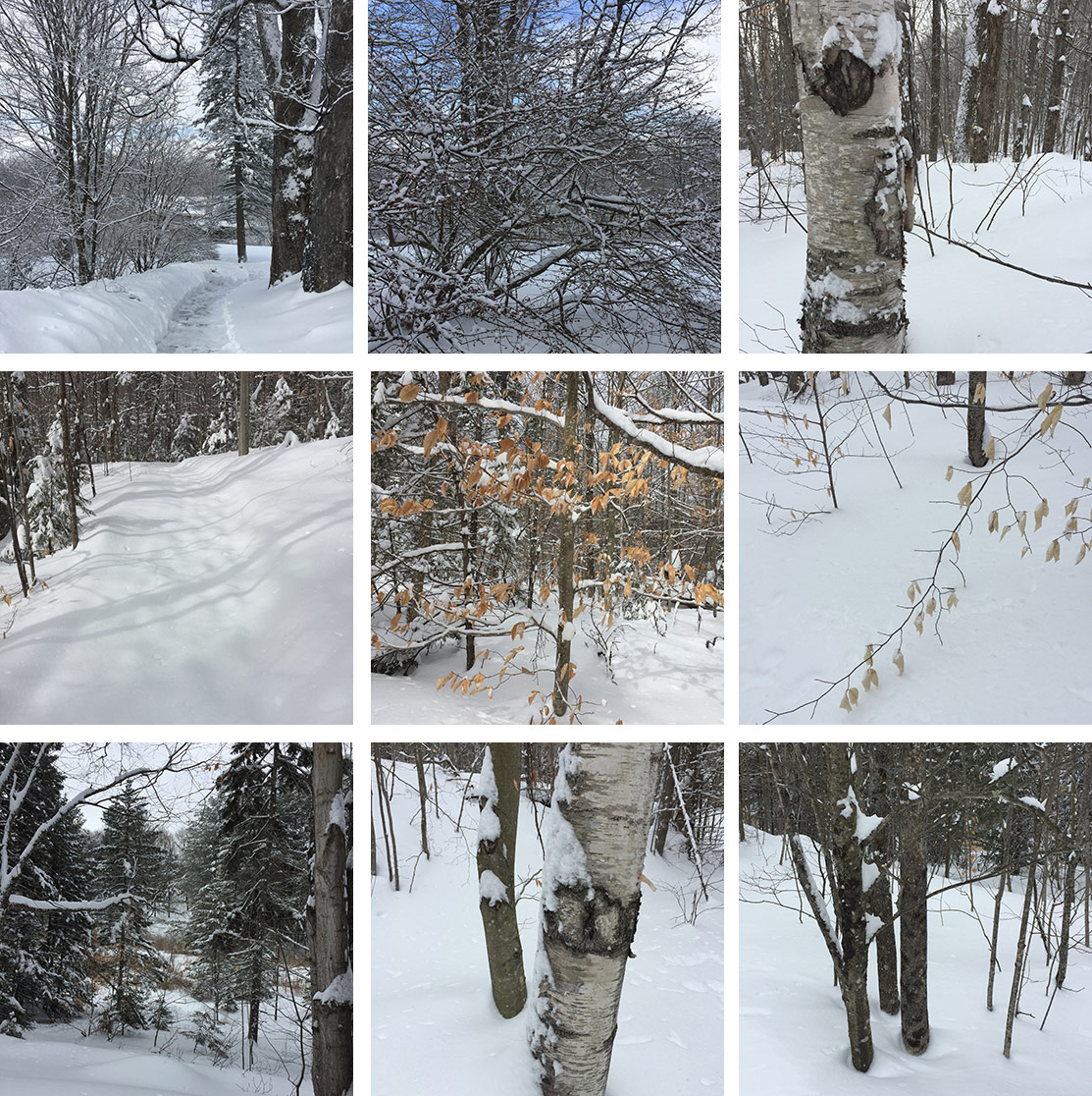 Some scenes from our walk in the Vermont woods.