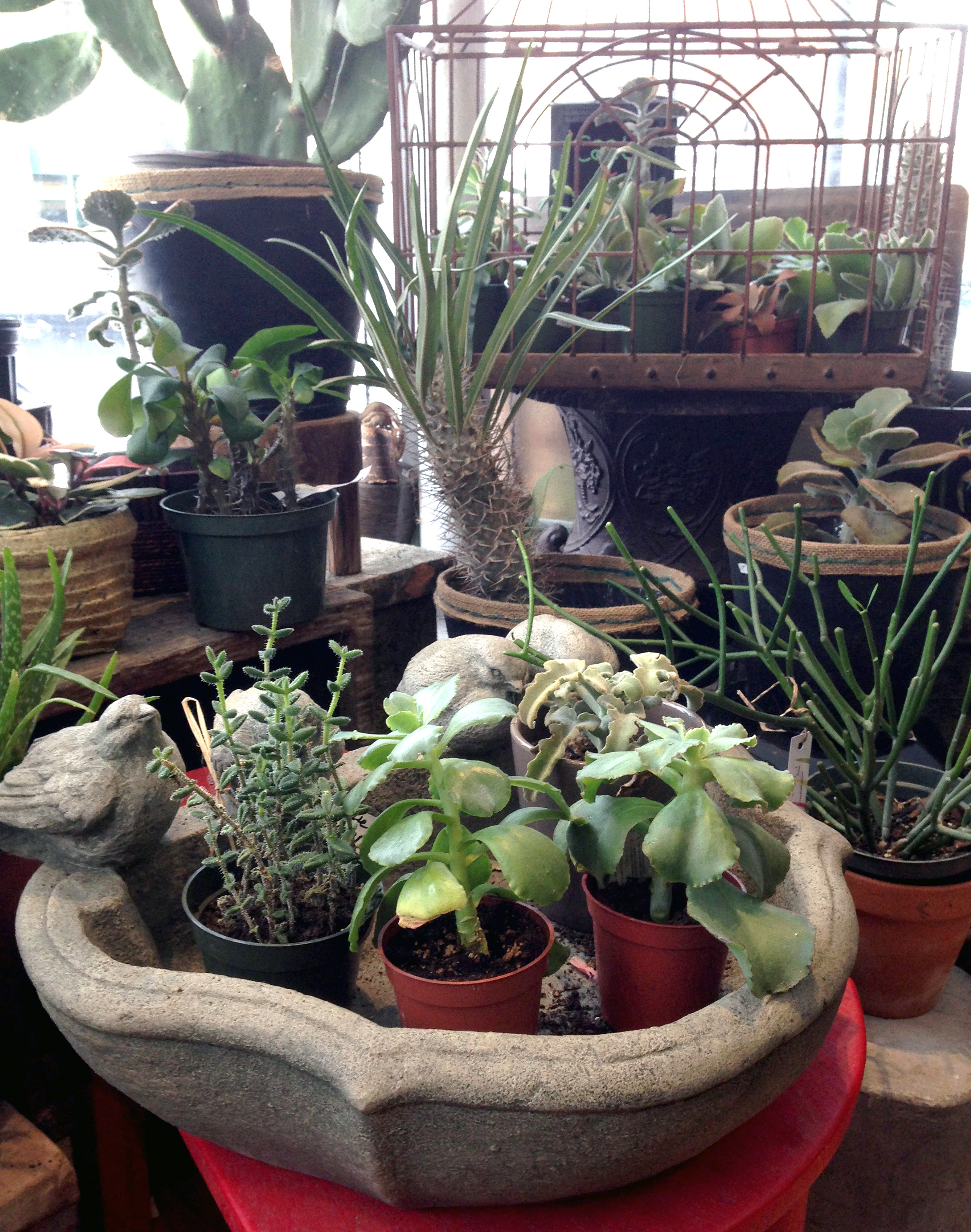 Plants are a lovely alternative to flowers for the non-conventionalist in your life!