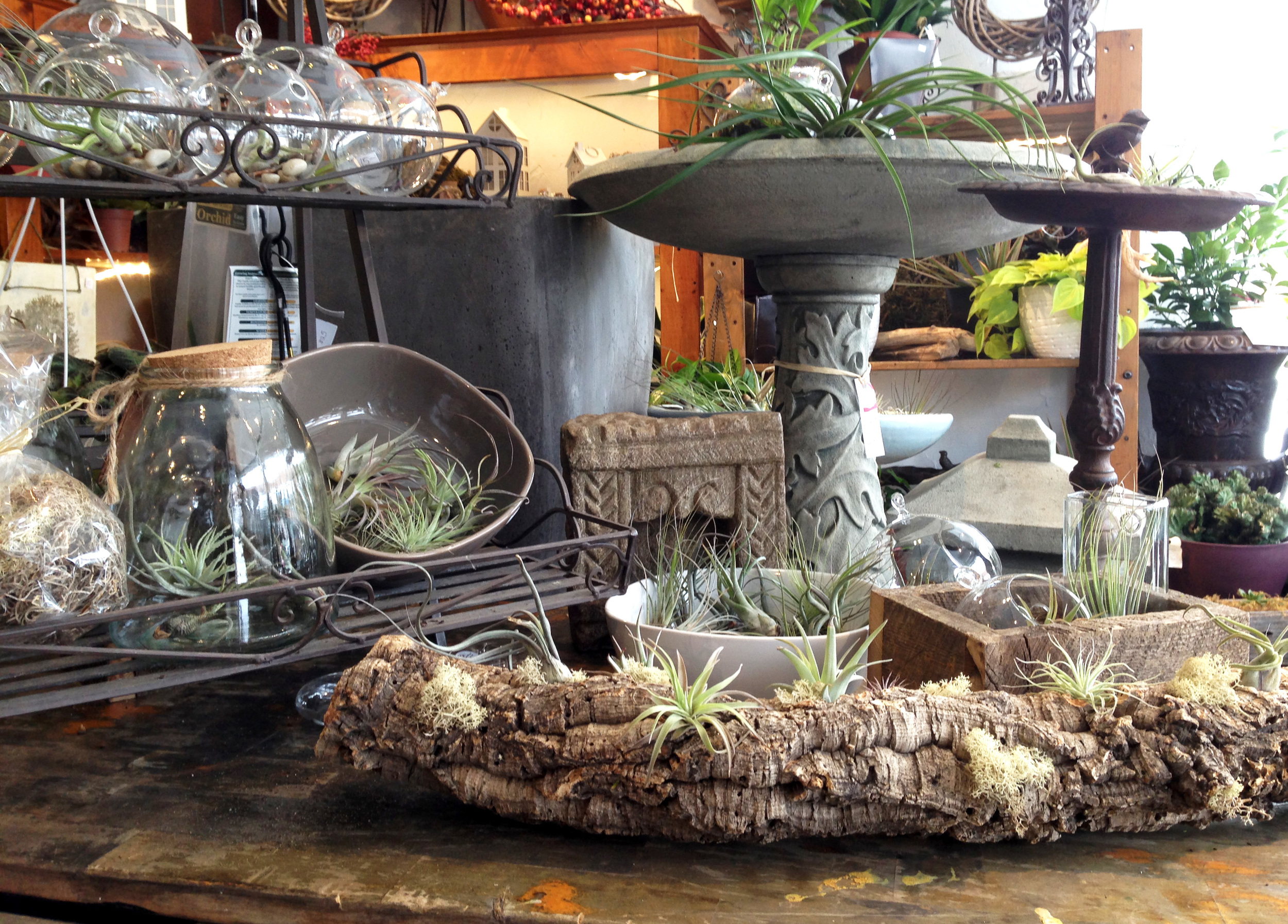 Terrariums are a unique gift choice to men and women. They're gorgeous, low maintenance, and very trendy