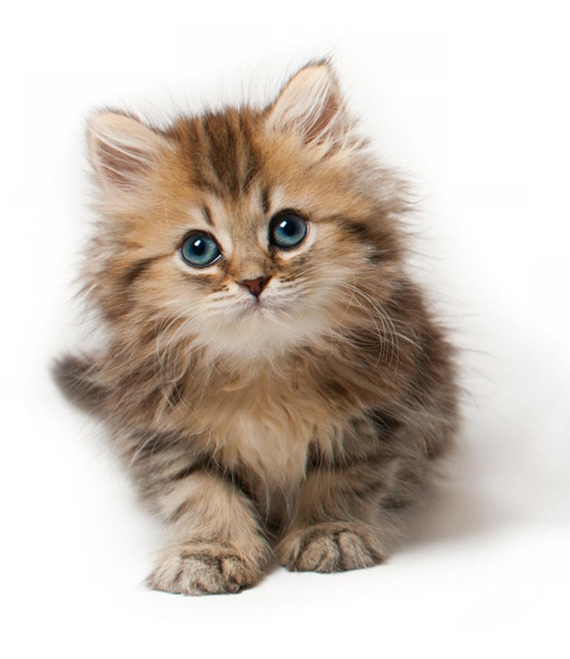 little_cute_cat_.