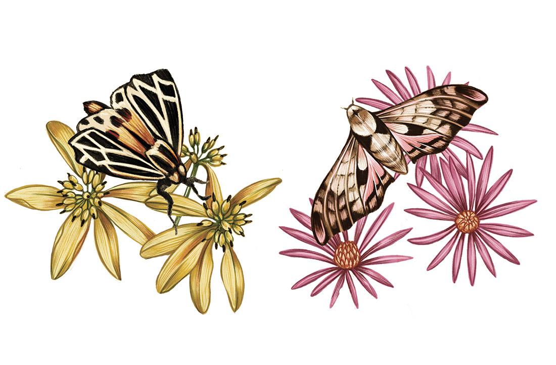 NC_pollinate_2.jpg