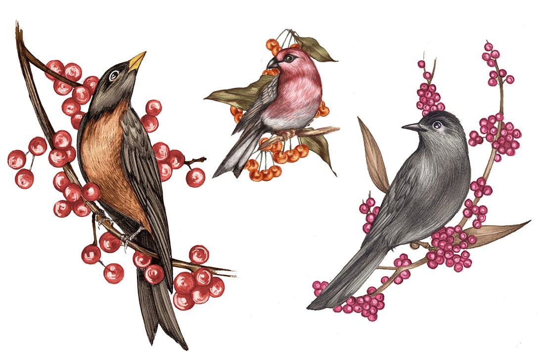 WSJ_winterbirds_1.jpg