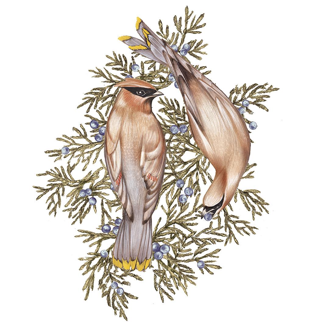 WSJ_winterbirds_2.jpg