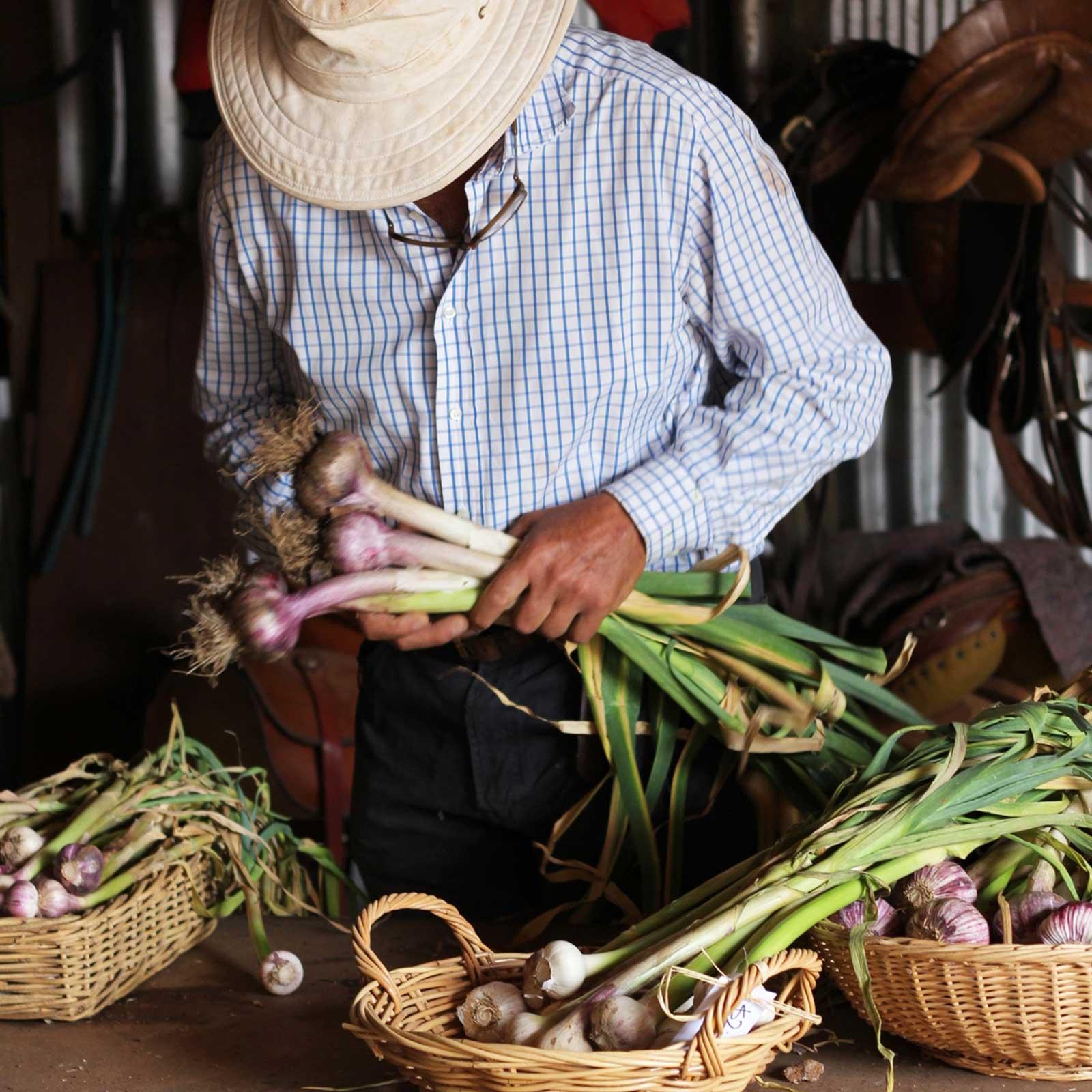 ken-sorts-garlic-morganics-farm.jpg