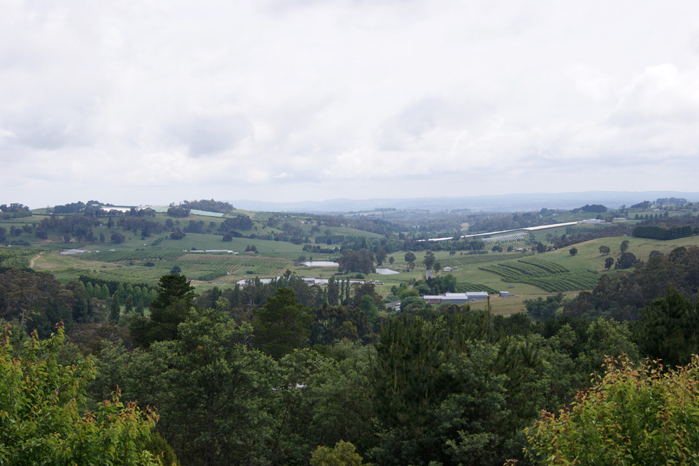 view-from-morganics-farm.jpg