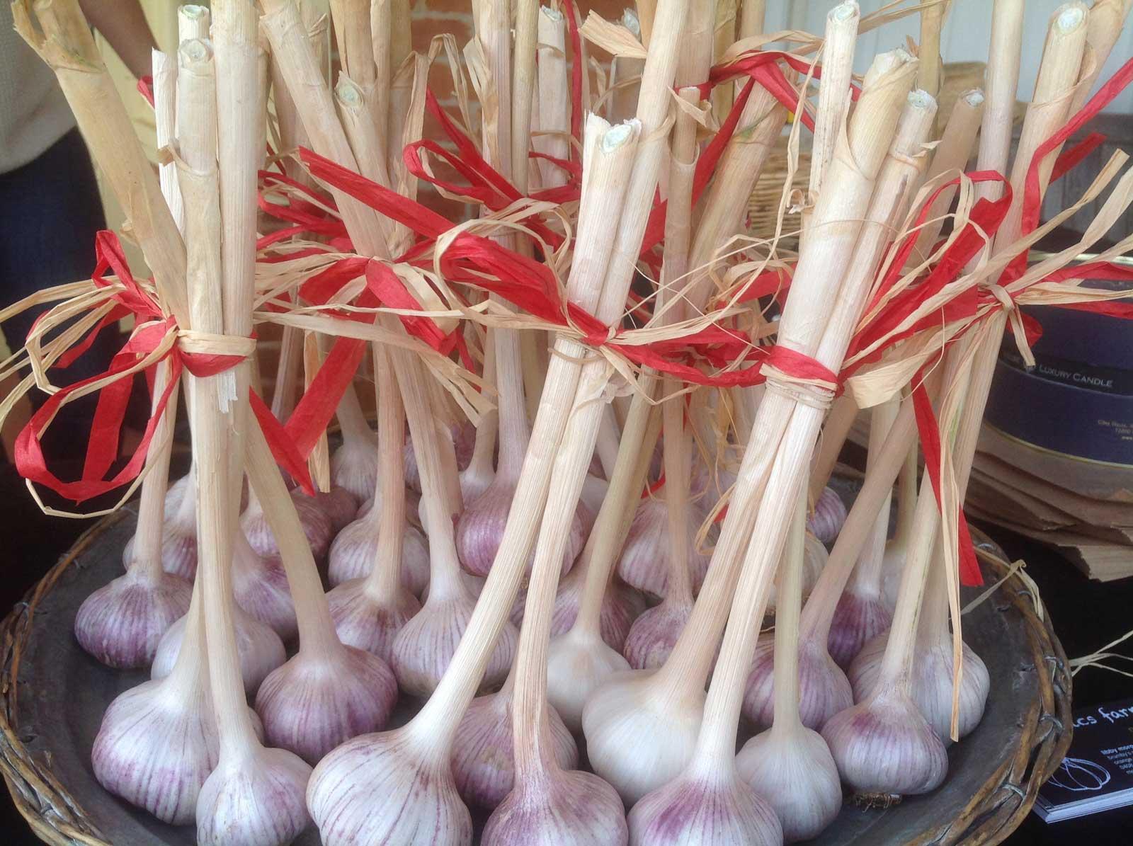bundles-of-organic-garlic-morganics-farm.jpg
