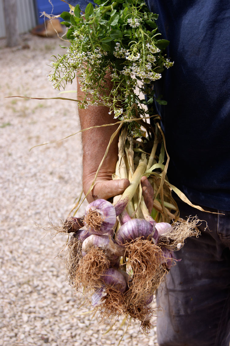 ken-holding-bunch-of-garlic-and-flowers-morganics-farm.jpg