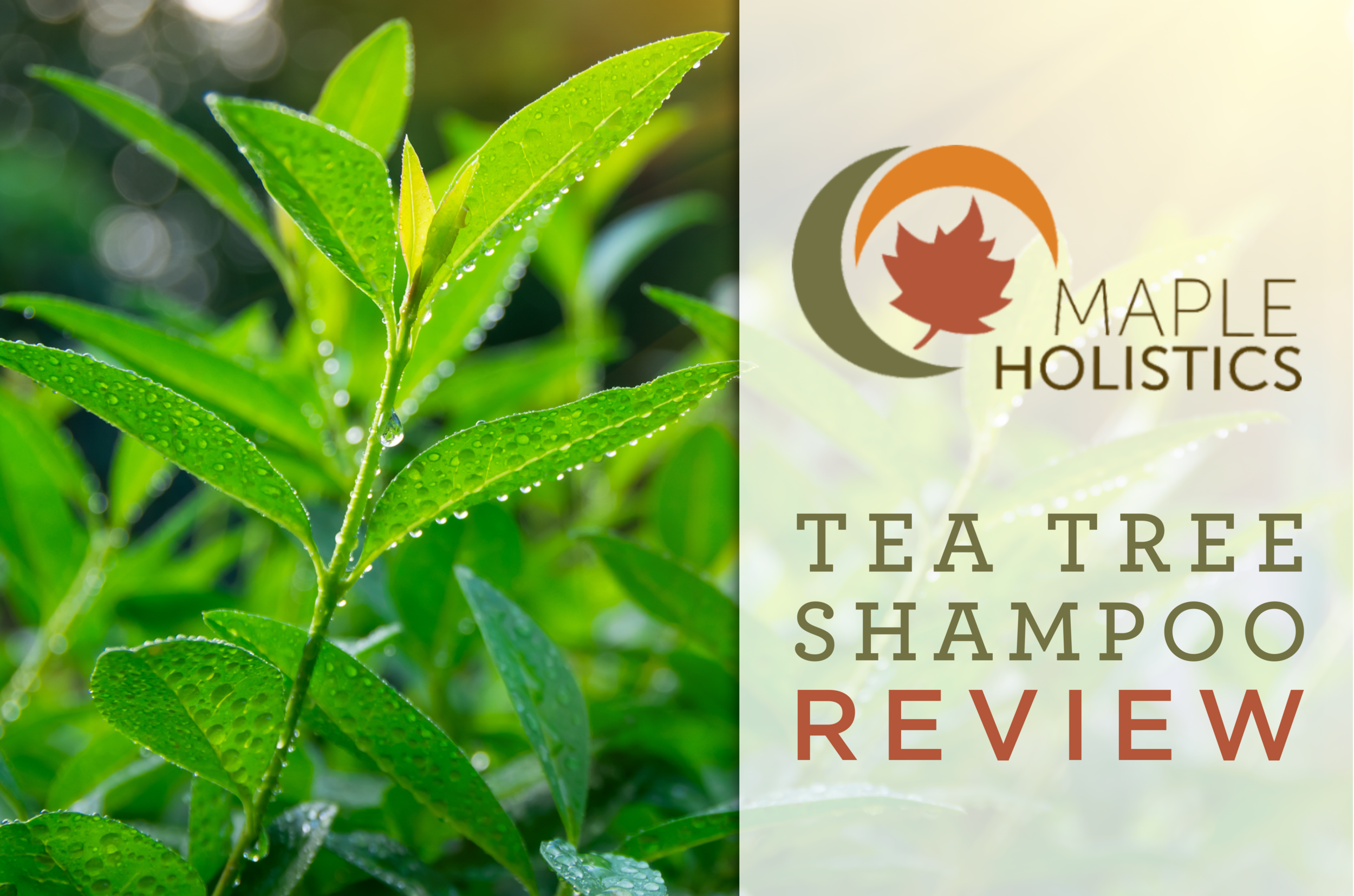 Maple Holistics Tea Tree Shampoo Review - Modern Southerner