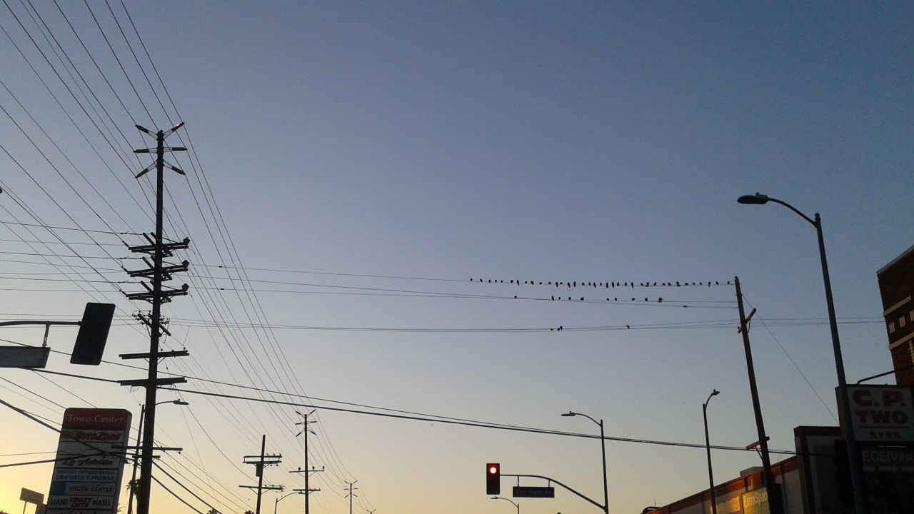 Birds on a wire congregate and make resolutions.