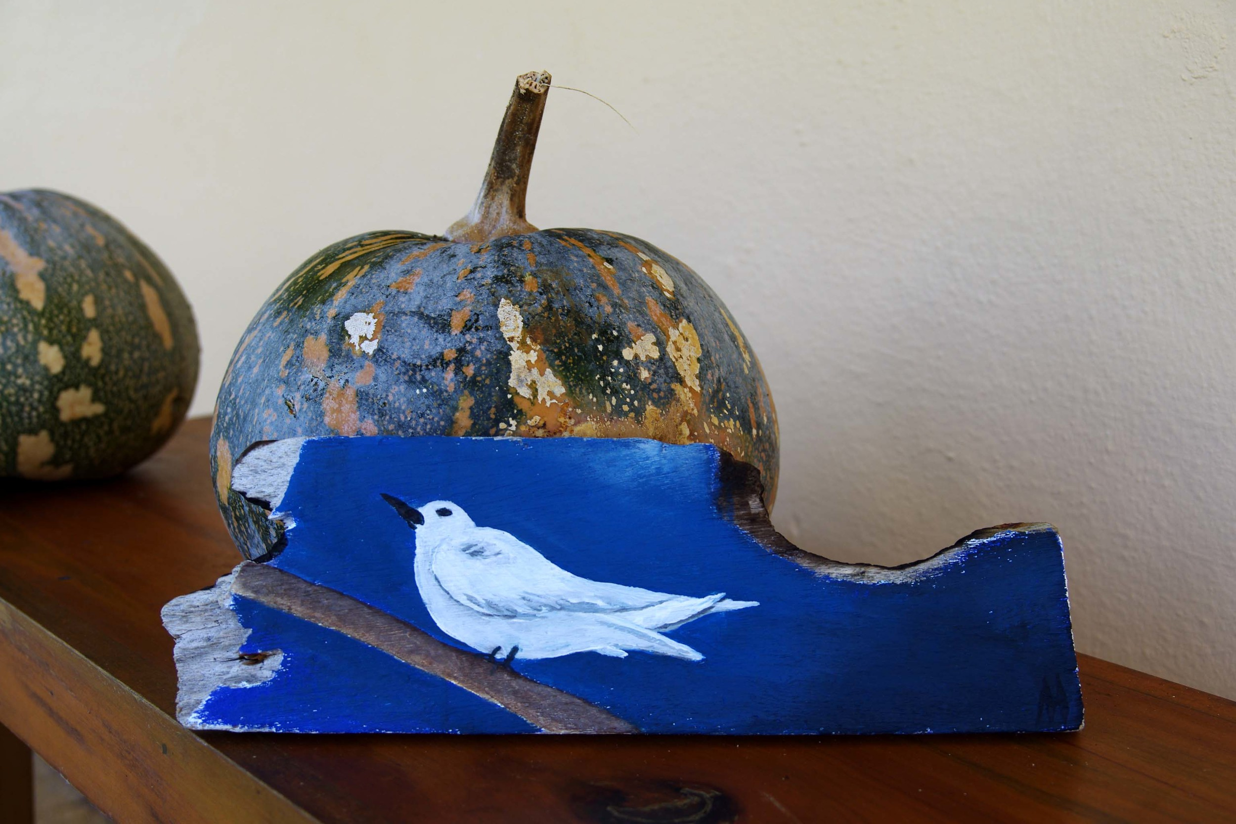 White Tern on Driftwood