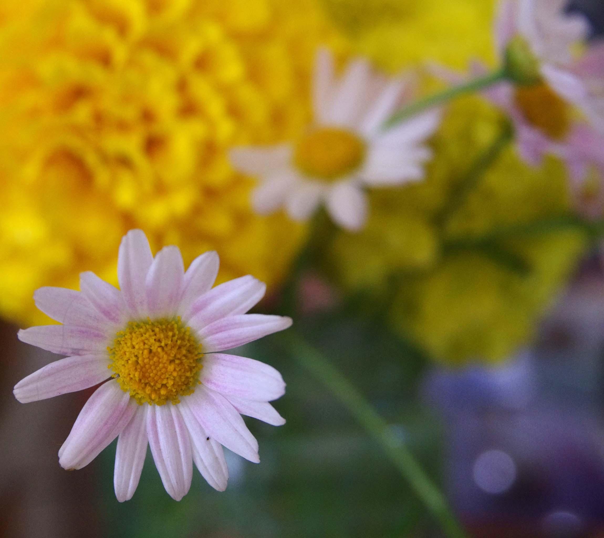 Studio flower3