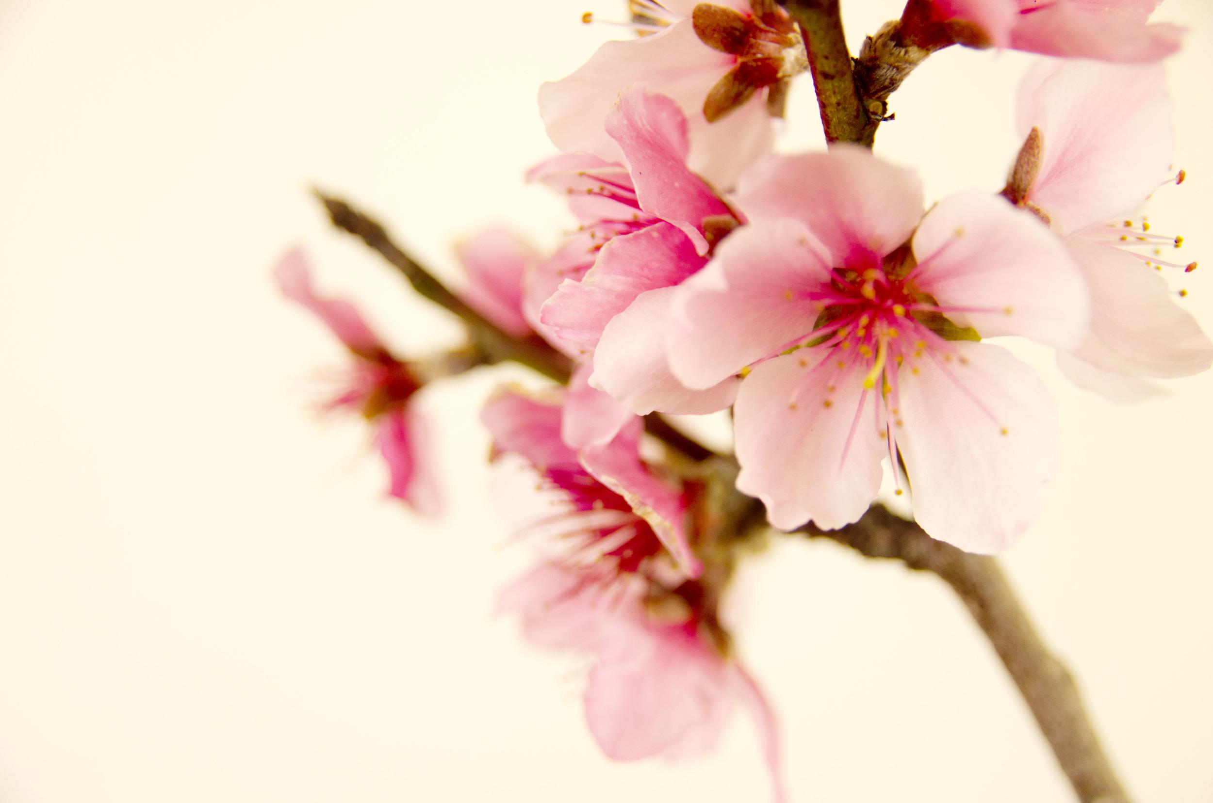 Blossom, available at  Society6