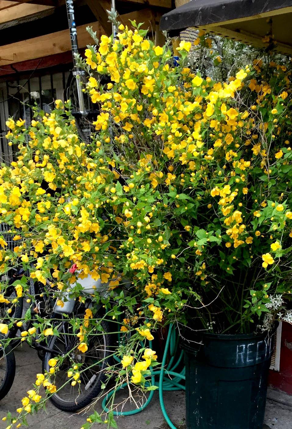 brooklyn_plant_studio_garden_9b.jpg