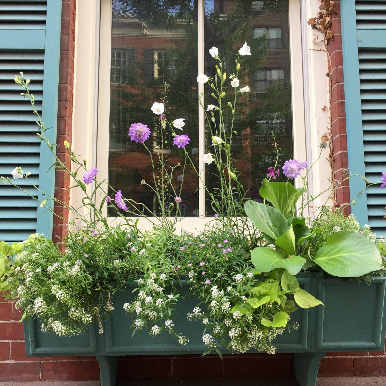 brooklyn_plant_studio_garden_12.jpg