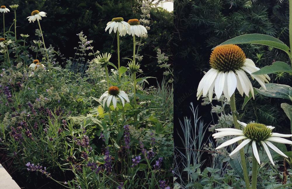 brooklyn_plant_studio_garden_18.jpg