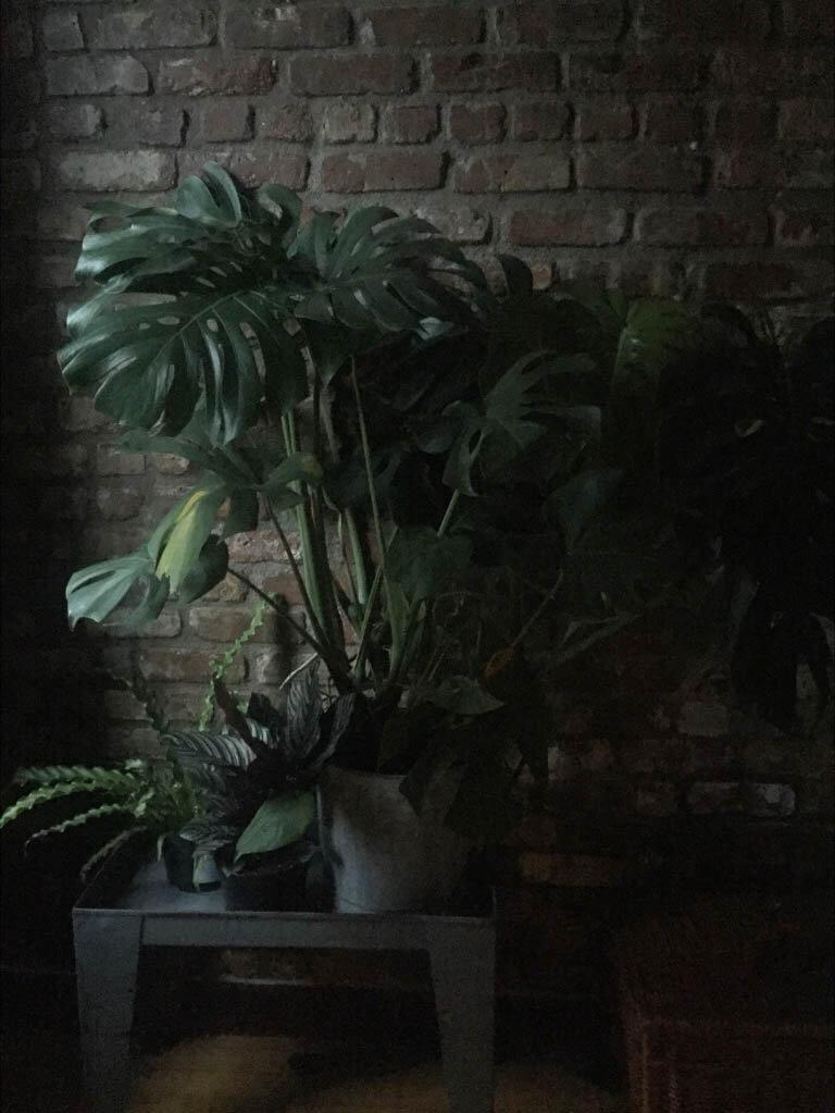 brooklyn_plant_studio_plant_18rev.jpg