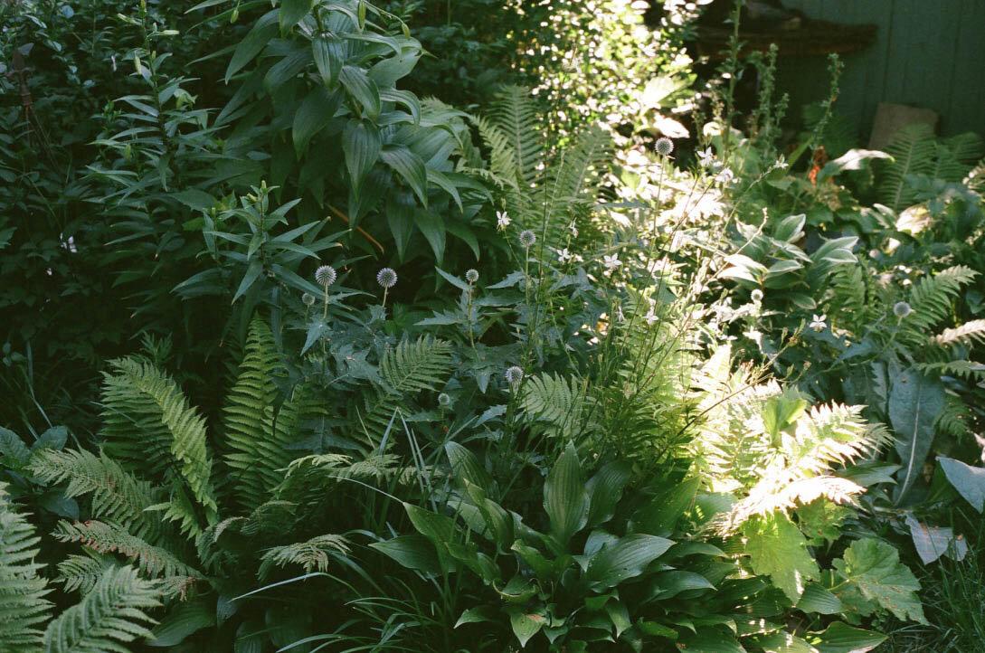 brooklyn_plant_studio_garden_29.jpg