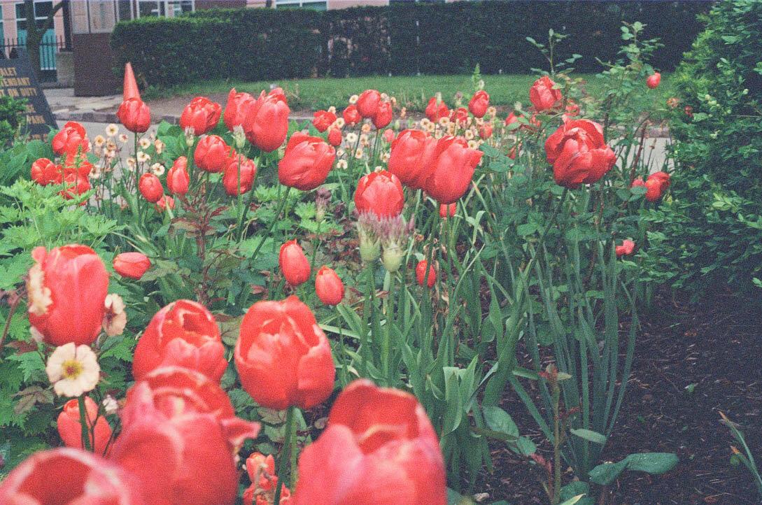 brooklyn_plant_studio_garden_30.jpg