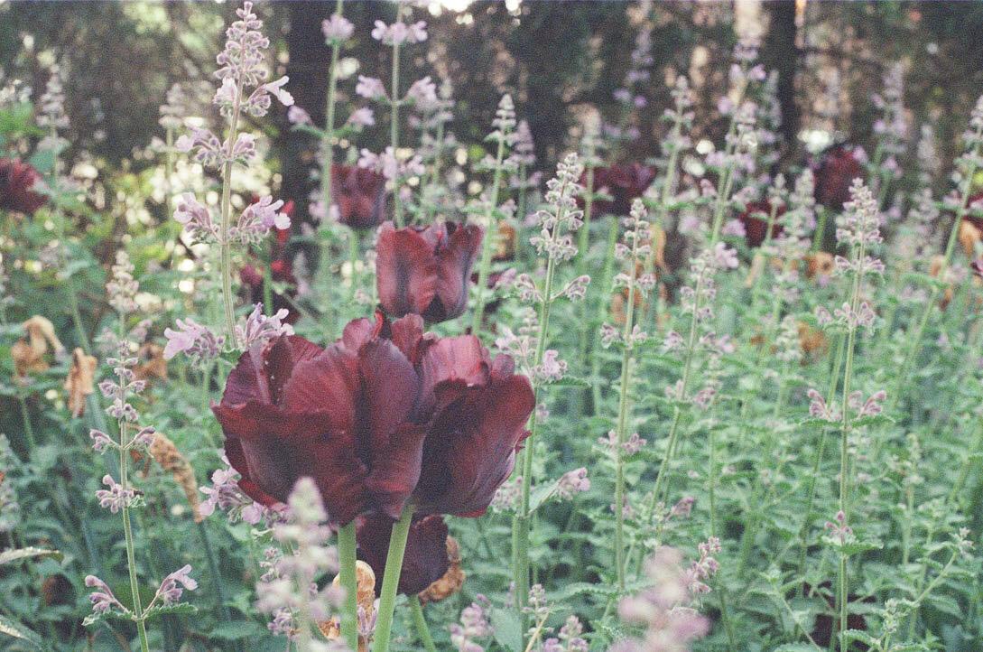 brooklyn_plant_studio_garden_31.jpg